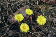 Четыре солнышка всухой траве…