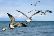 На серебряных крыльях…