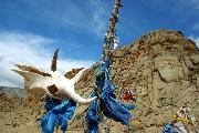 Под небом Монголии