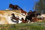 Пугливые лошадки...