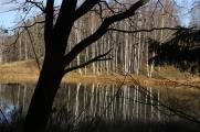 Нижний пруд
