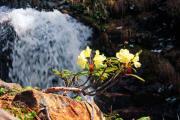 У водопада…