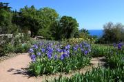 В Никитском саду