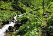 Тропа вдоль ручья